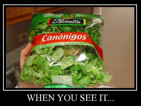Frog In Lettuce Bag