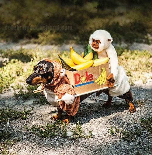 Funny Dog Costume & The 40 Best Halloween Costumes Weu0027ve Ever Seen