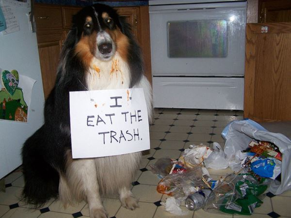 I Eat Trash