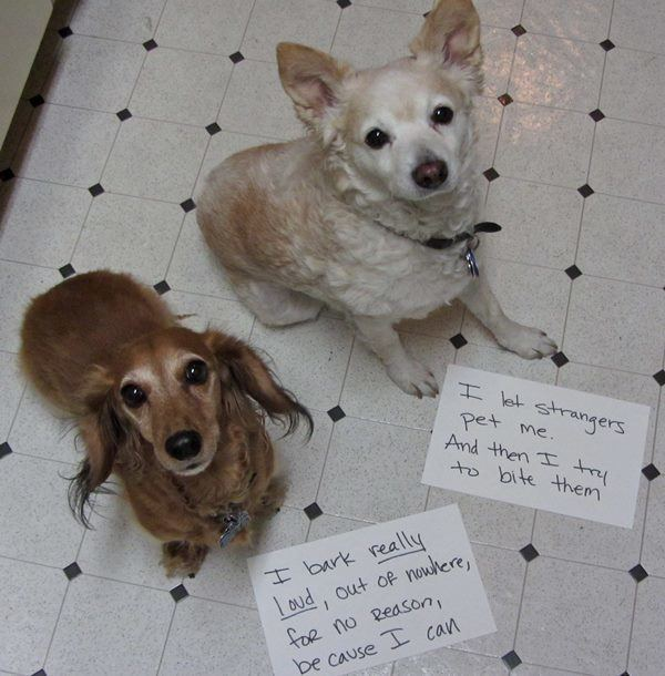 Shaming Two Dogs