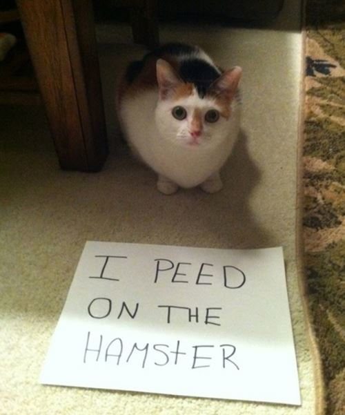 Cat Shaming Hamster
