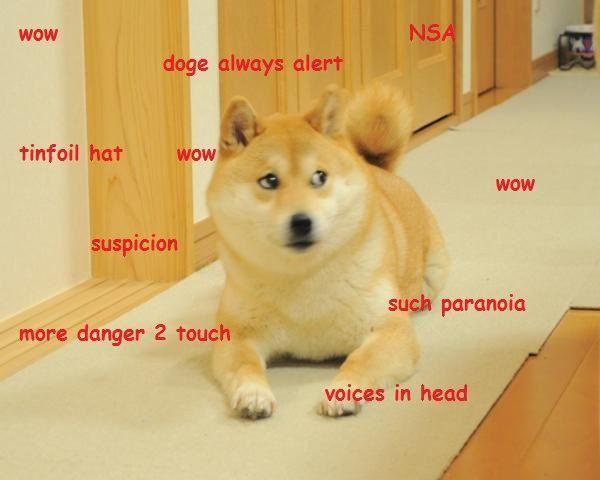 Conspiracy Shiba