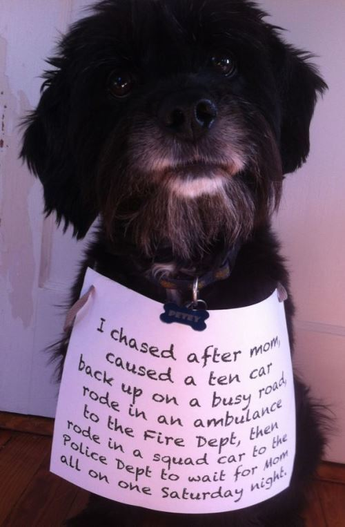 Dog Chase Pet Shaming Picture
