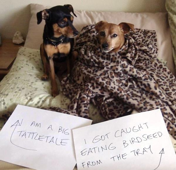 Dog Shaming Dogs