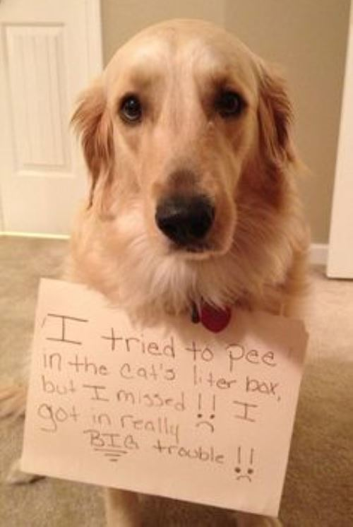 Dog Shaming Pees In The Litter Box