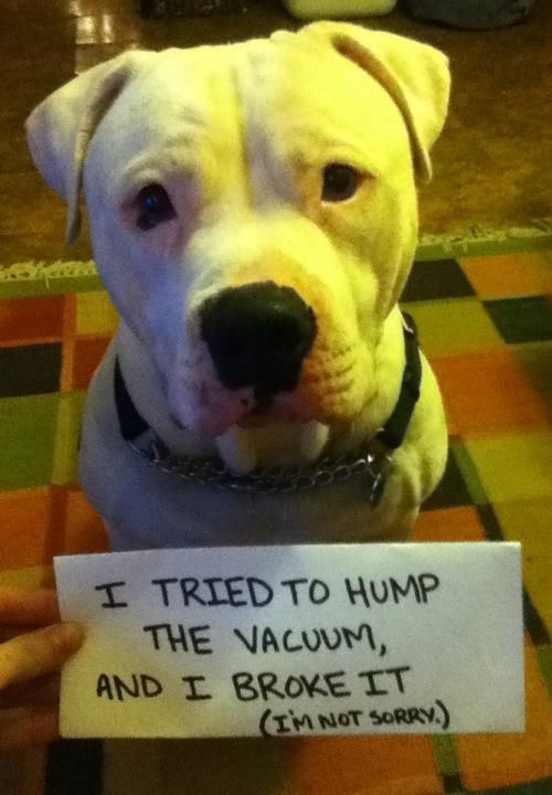 Dog Shaming Vacuum
