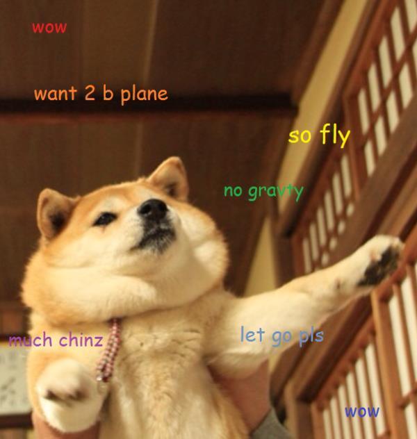 Dog Meme Plane
