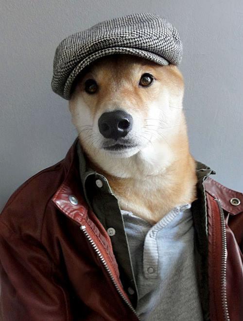 Fashion Doge