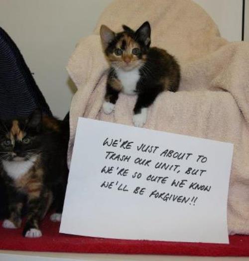 Kitten Shaming