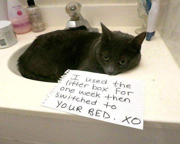 Pet Shaming Bad Cat