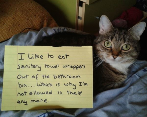 Pet Shaming Cat Bathroom