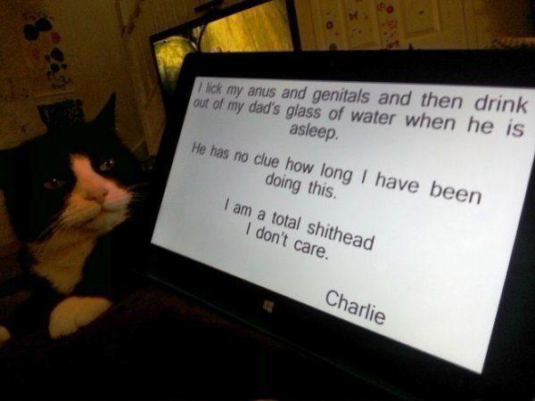 Pet Shaming The Cat