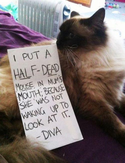 Dead Mouse Pet Shame