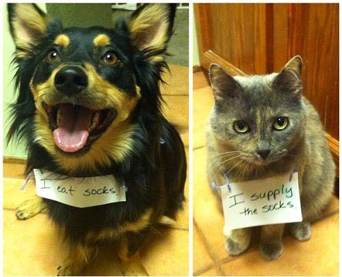 Pet Shame Dog Cat