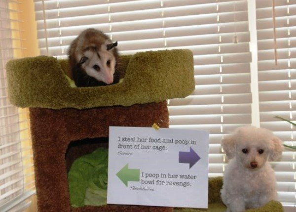 Shaming A Dog And Ferret