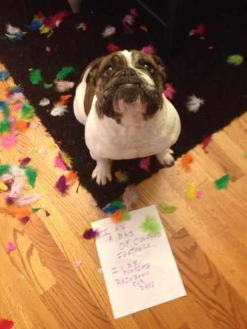 Hilarious Pet Shaming Photos