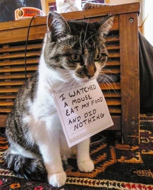 Inept Cat Pet Sign Shame