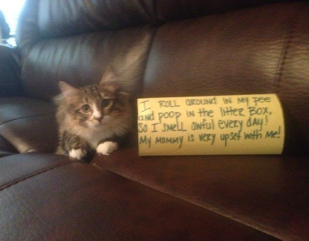 Cat Shaming Rolling Around