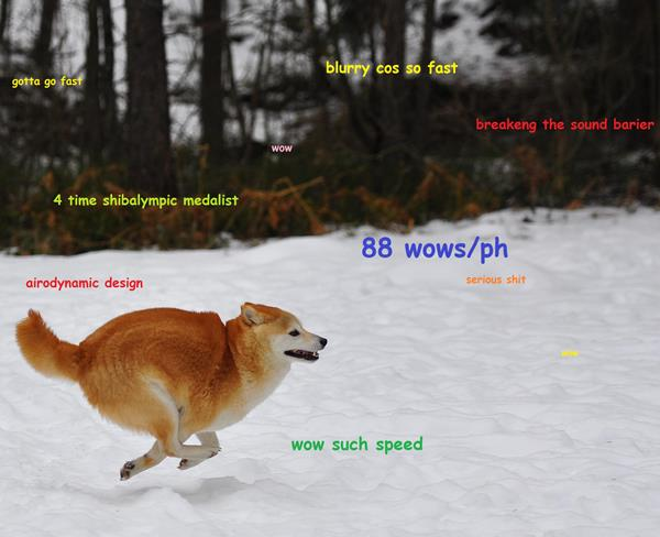 Shiba Inu Meme Running