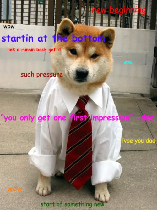 Shibe Goes To Work