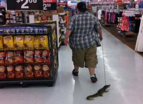 Alligator At Walmart