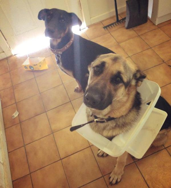 Trash Can Dog Jerk Funny Animal Pictures