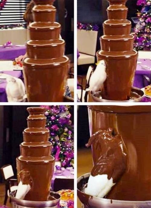 Bird Goes Into Chocolate Fountain