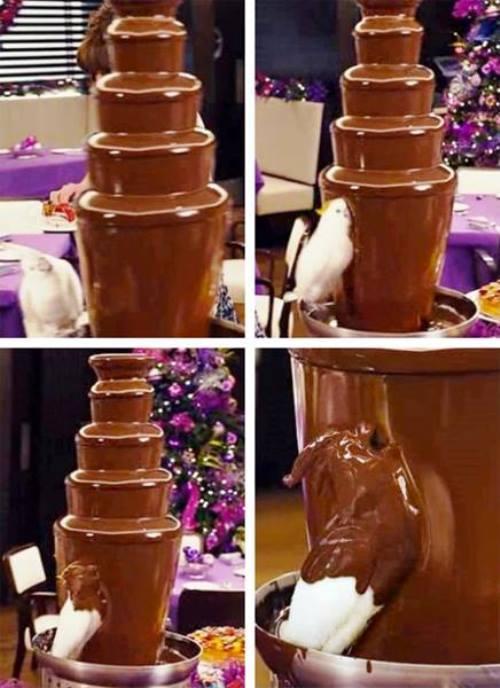 Bird Goes Into Chocolate Fountain