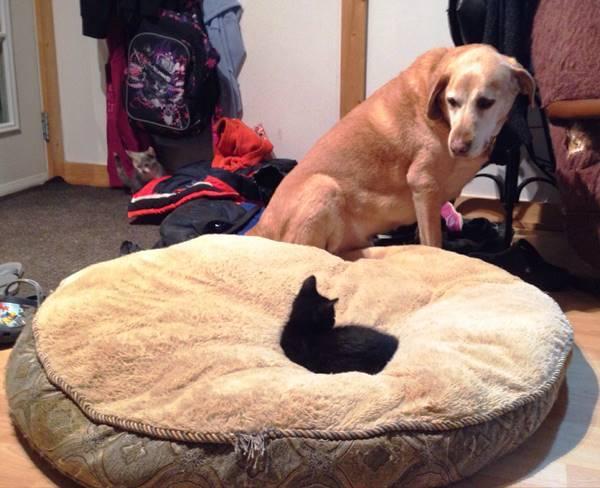 Cat Steals Bed Animals Being Jerks