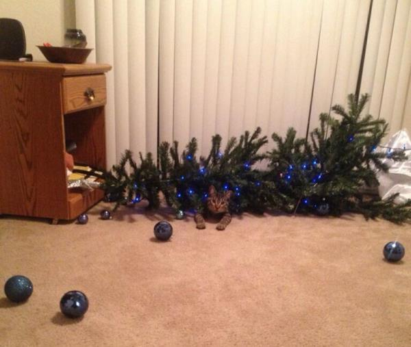 Cat Takes Down Christmas Tree