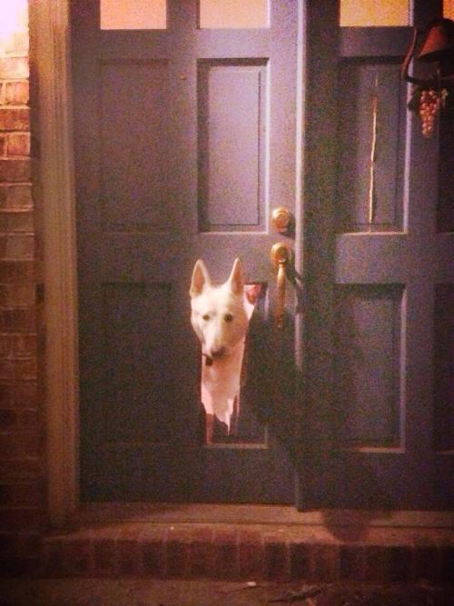 Dog Breaks Door