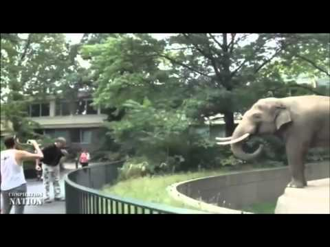 Video thumbnail for youtube video Hilarious Pictures Of Animals Being Jerks