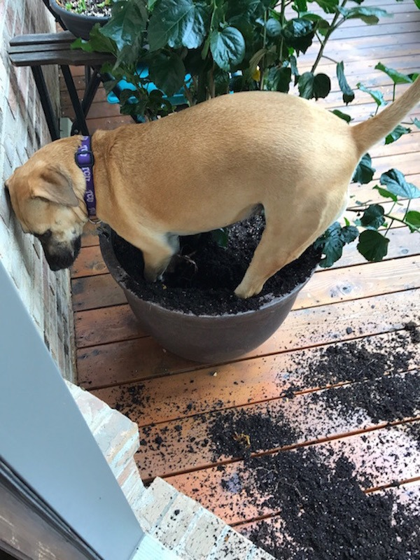 Potted Plant Destroyer