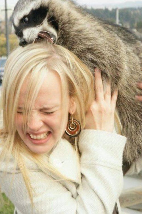 Raccoon Tries To Eat Girl