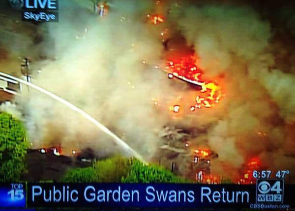 Swans Burn Down Public Gardens