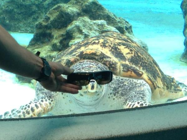 Deal With It Sea Turtle