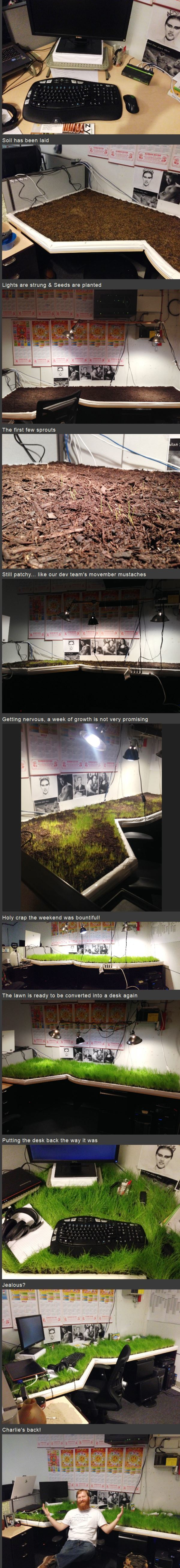 Genius Pranks Grass Office