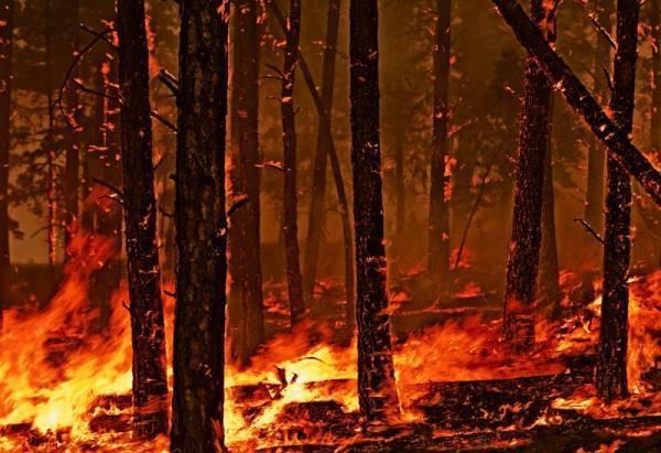 Fire Photograph