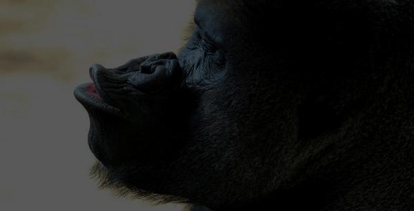 gorilla-imitating-porn-star