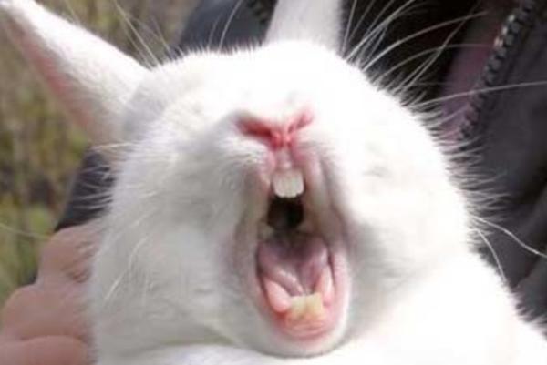 rabbit-imitating-porn-star