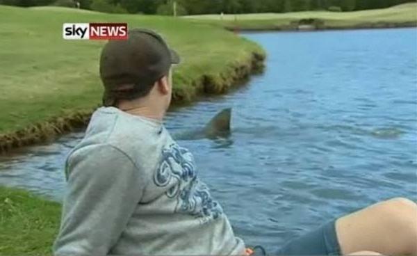 Fresh Water Sharks