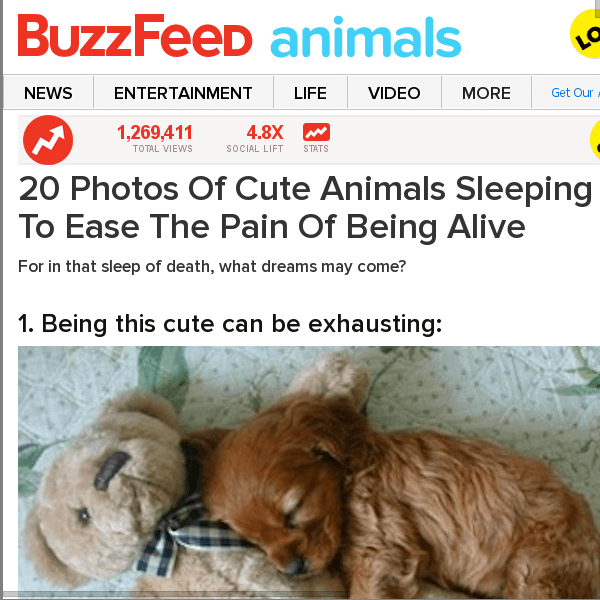 buzzfeed-puppies-existential-pain-2