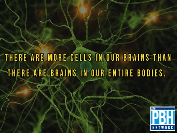 Cells Versus Brains