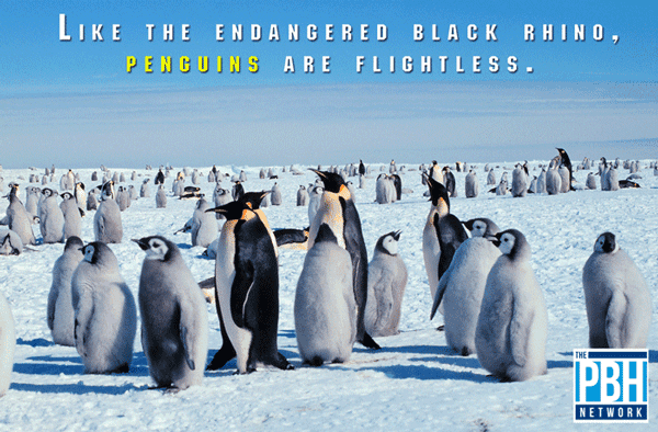 Flightless Penguins
