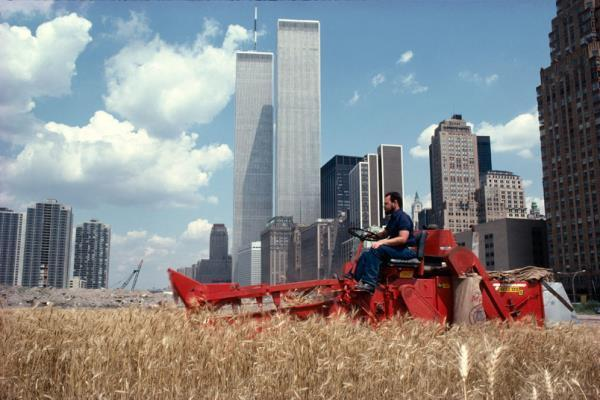 Manhattan Wheat Field
