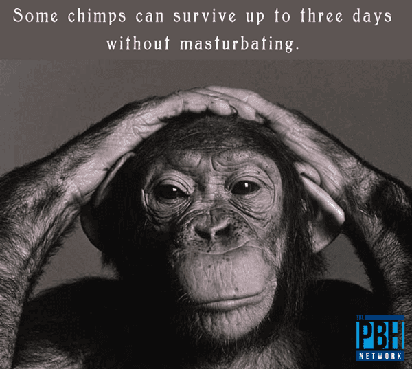 Random Facts About Chimps