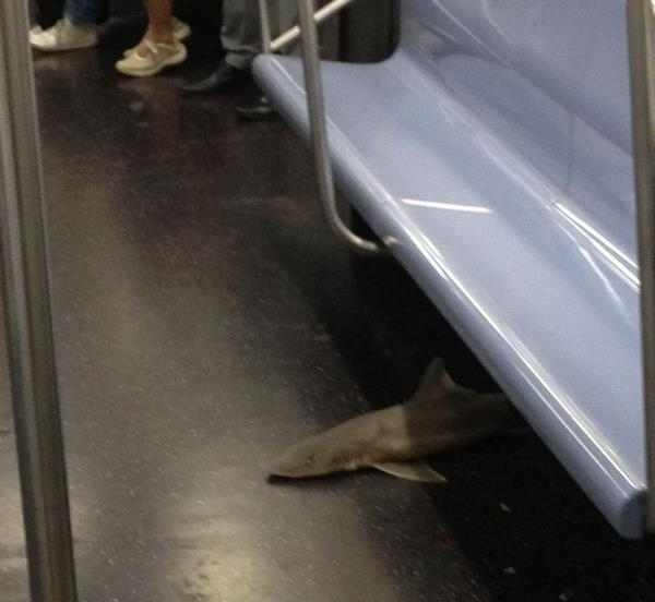 Shark On The Subway
