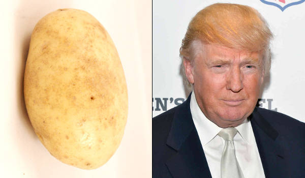 Donald Trump As A Potato
