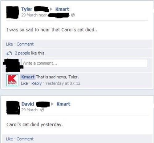 carols-cat