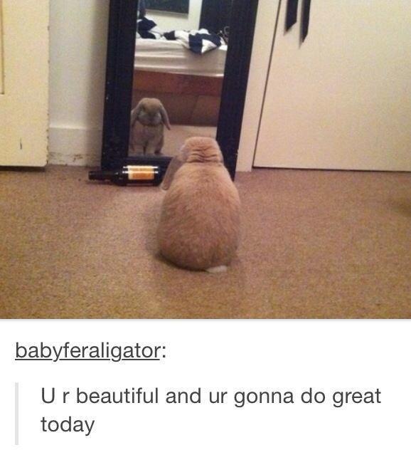 Hilarious Tumblr Moments Fluffy Rabbit
